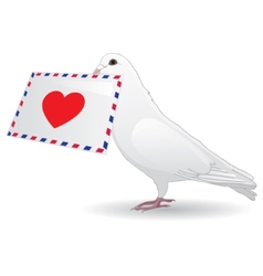 Dove with a love letter vector