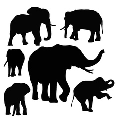 Thai Elephants vector image