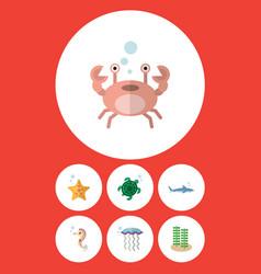 Flat icon marine set of cancer shark medusa and vector