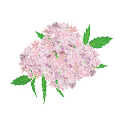 pink flowers isolated on white background vector image