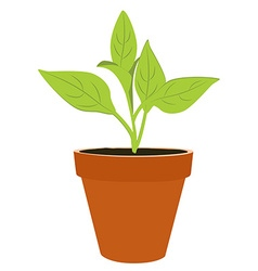 Plant in a pot vector image vector image