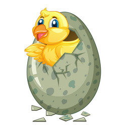 Little chick comes out of gray egg vector