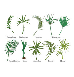 Palm leaves set isolated on white colored vector