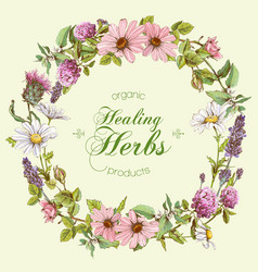 Herbal banners vector