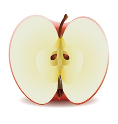 Half red apple vector