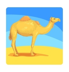 Camel famous touristic attraction of united arab vector
