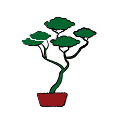 Bonsai tree of pine ceramic pot botanical vector