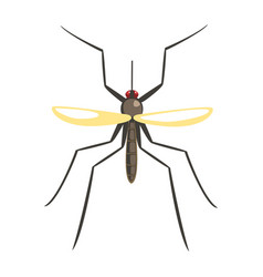 mosquito insect colorful cartoon character vector image