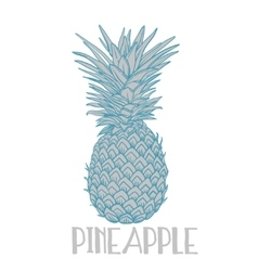 Pineapple tropical fruit object Health vector image vector image