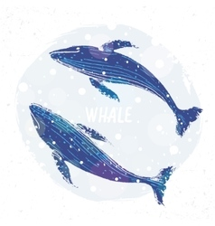 Two blue whale vector