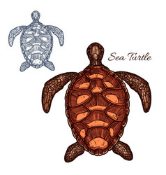 Sea turtle isolated icon vector
