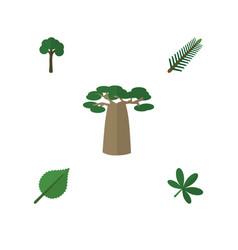 Flat icon ecology set of baobab evergreen linden vector