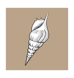 White spiral conch sea shell isolated sketch vector