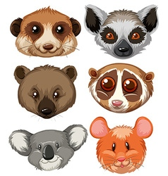 Different type of animal heads vector