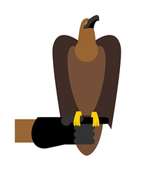 Falcon hunting birds of prey sitting on hand vector