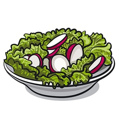 Salad with fresh radish and lettuce vector