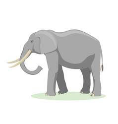 African elephant cartoon vector