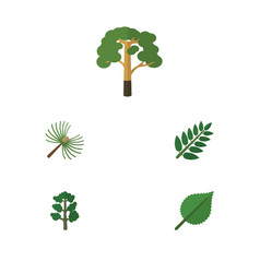 Flat icon bio set of rosemary wood linden and vector