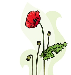 Poppy background vector