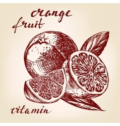 Fruit orange set hand drawn llustration vector