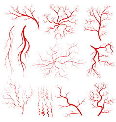 Vein set human vessel eye veins vector