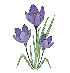 First spring flower vector