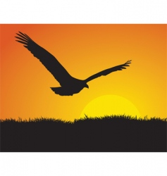 eagle at sunset vector image vector image