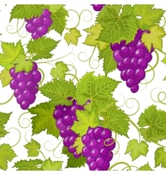 seamless pattern with violet grapes and vector image