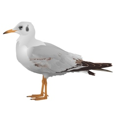 Seagull stands isolated on white vector