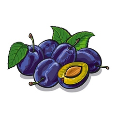 fresh plums vector image