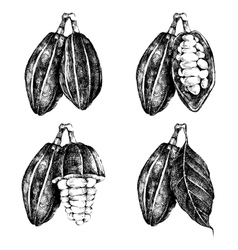 Hand drawn cocoa beans set vector