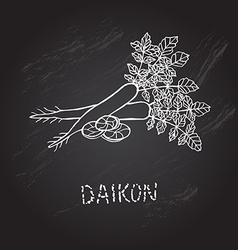 Hand drawn daikon vector