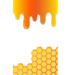 Honeycomb and honey vector
