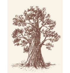 Broad-leaved tree vector