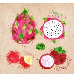 Exotic fruit watercolor dragon fruit rambutan vector