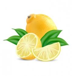 fresh lemons vector image