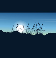 Silhouette of coarse grass at morning scenery vector