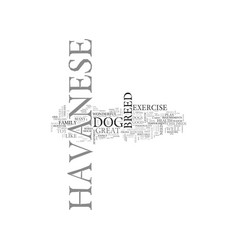 What to expect from a havanese text word cloud vector
