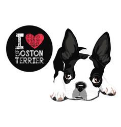 i love boston terrier vector image