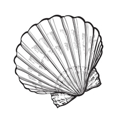 Saltwater scallop sea shell isolated sketch style vector