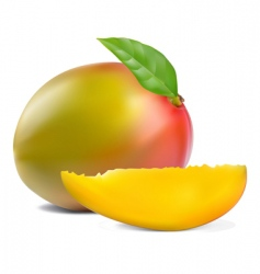 fresh mango vector image vector image