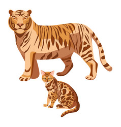 Bengal cats isolated on white big tiger and vector
