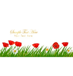 Poppy white background vector