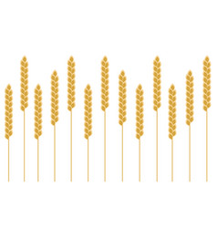 Background wheat cereal vector