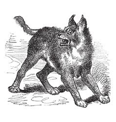 Caracal or lynx vintage engraving vector