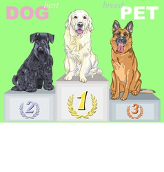 smiling dog champion on the podium vector image vector image