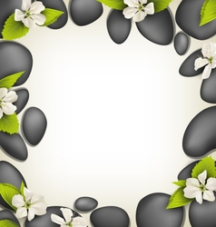 Spa stones with cherry white flowers like frame on vector
