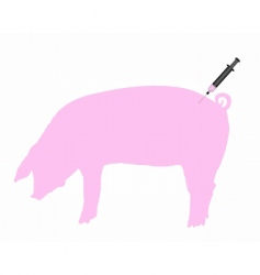 swine inoculation vector image