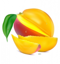 Mango with section vector