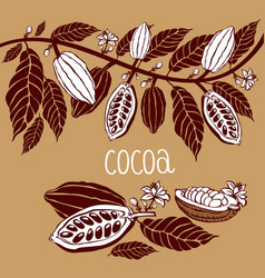 Cacao beans plant v exotic cacao plants vector